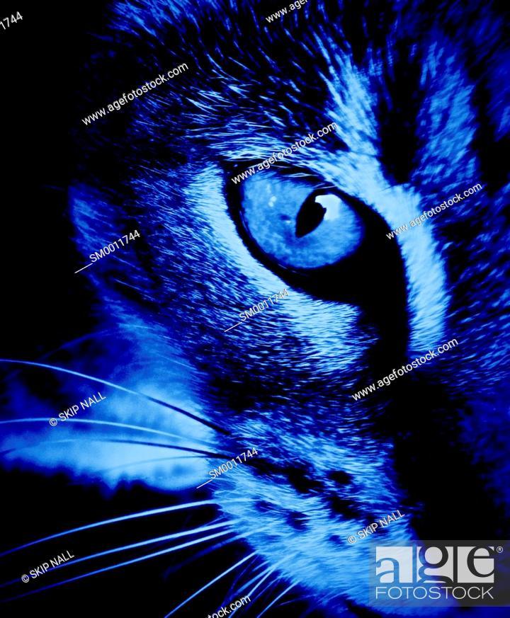 Stock Photo: Closeup of a cats eye.