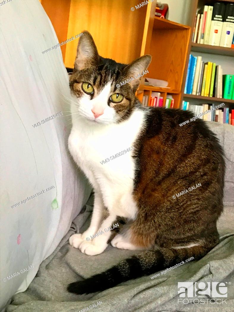 Stock Photo: Tabby and white cat sitting at home.
