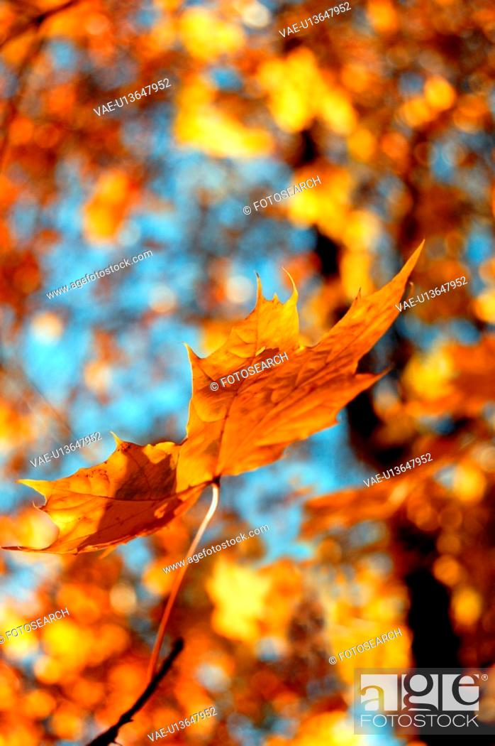 Stock Photo: daylight, background, czech, CLOSE, branches, leaf, autumn.
