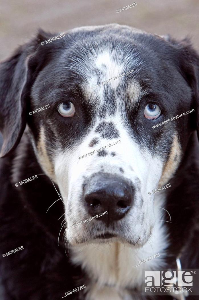 Stock Photo: Abandoned dog.
