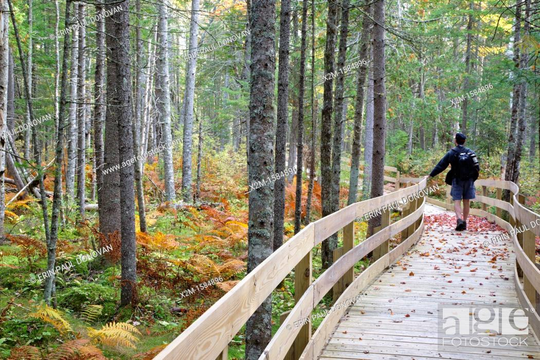 Stock Photo: Pondicherry Wildlife Refuge - Mud Pond Trail in Jefferson, New Hampshire USA during the autumn months.