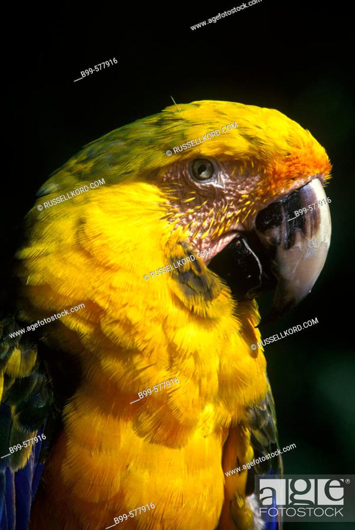 Stock Photo: Color: Tropical Macaw Bird.