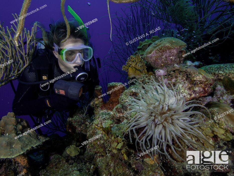 Stock Photo: Caribbean Sea, Los Roques Venezuela, woman Scuba-Diver underwater photographer Tour, , Underwater, Venezuela, Sponge.