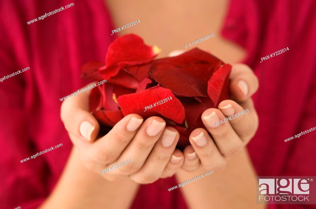 Stock Photo: Mid section view of a woman holding a handful of red rose petals.