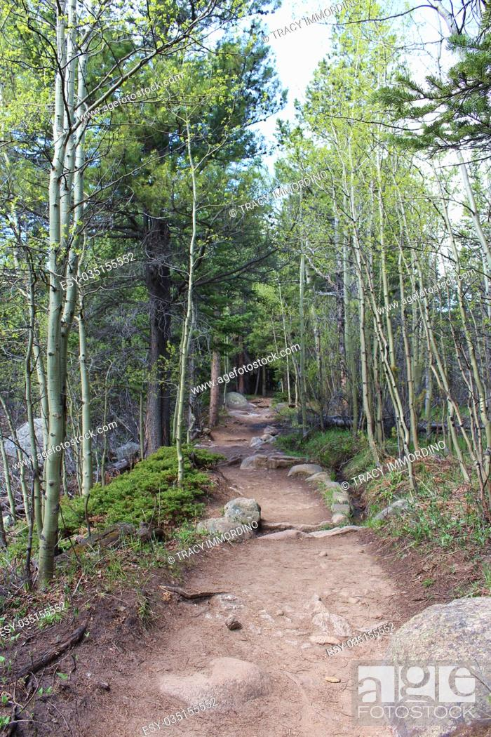 Stock Photo: A dirt path in a forest on the Wild Basin Trail in the Rocky Mountain National Park, Colorado, USA.