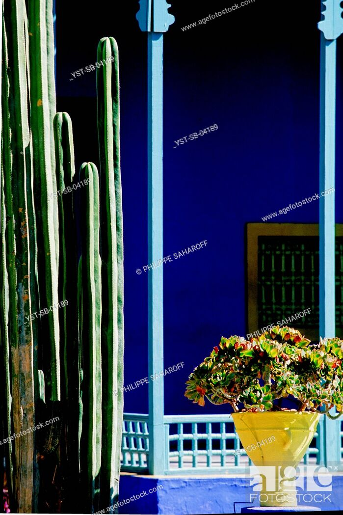 Stock Photo: Majorelle Garden, Marrakech, Morocco, Africa.