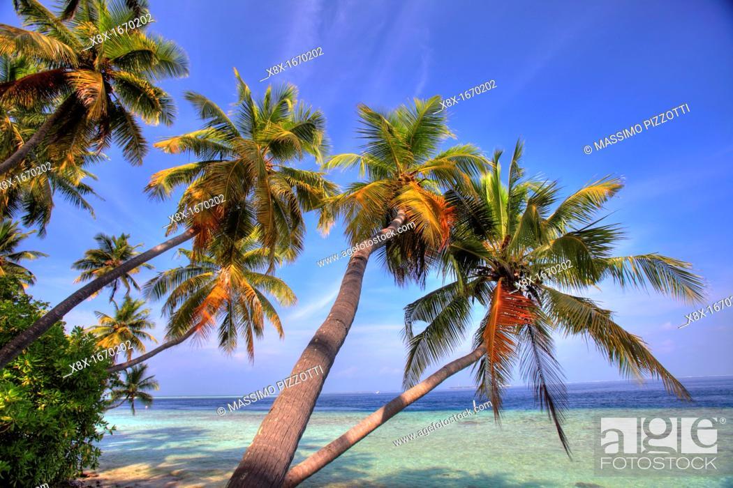 Stock Photo: Palm trees on the seashore, Biyadhoo island, Maldives.