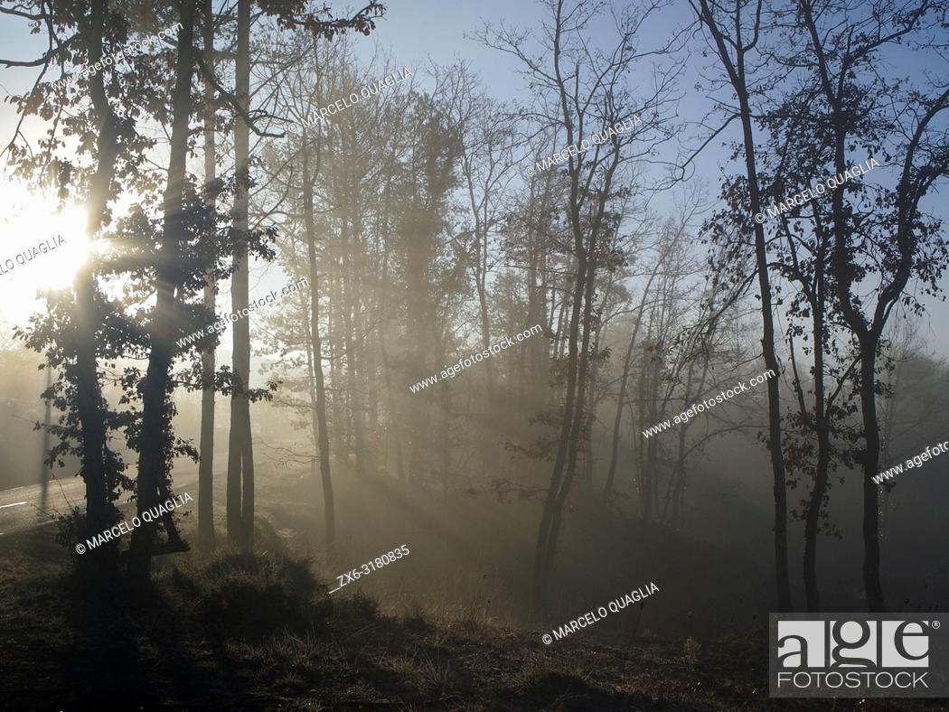 Stock Photo: Sun rays through oak trees on a foggy winter morning. Lluçanès region, Barcelona province, Catalonia, Spain.