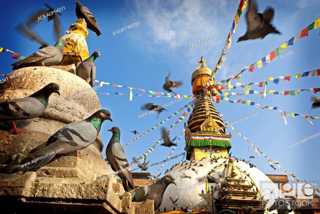 Stock Photo: Pigeons Columba livia in foreground of Kathesimbu Stupa, Kathmandu, Nepal.