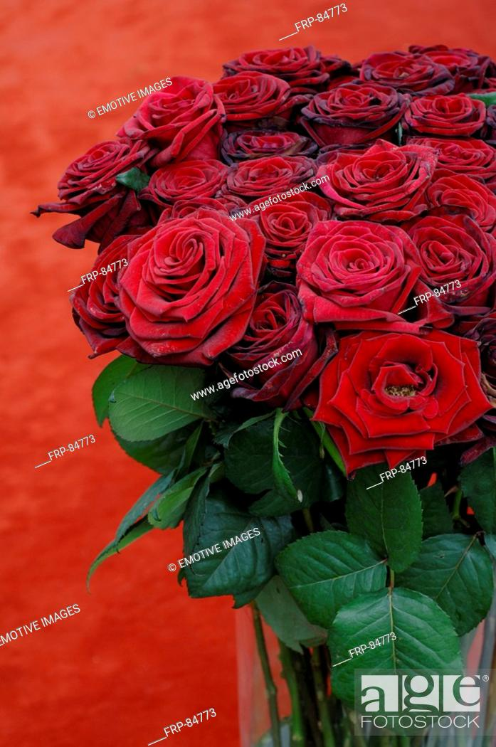 Stock Photo: Bunch of red roses.