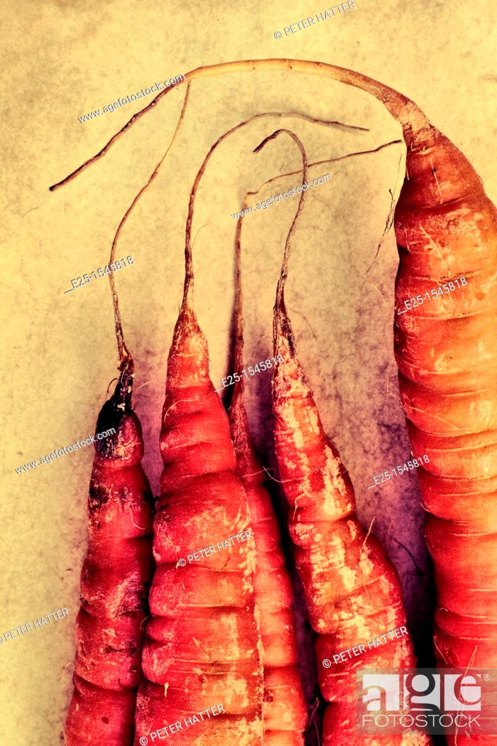 Stock Photo: Close up of the tips of Carrots organically grown on a slightly textured background.