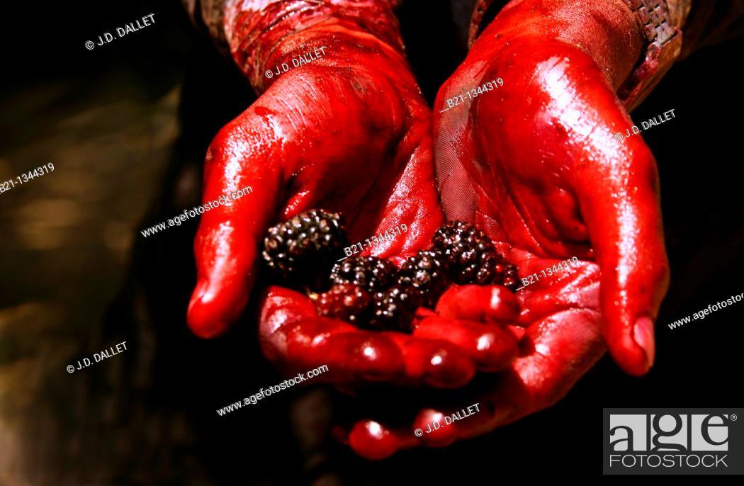 Stock Photo: Syria, Hauran, Qanawat. Harvesting berries.