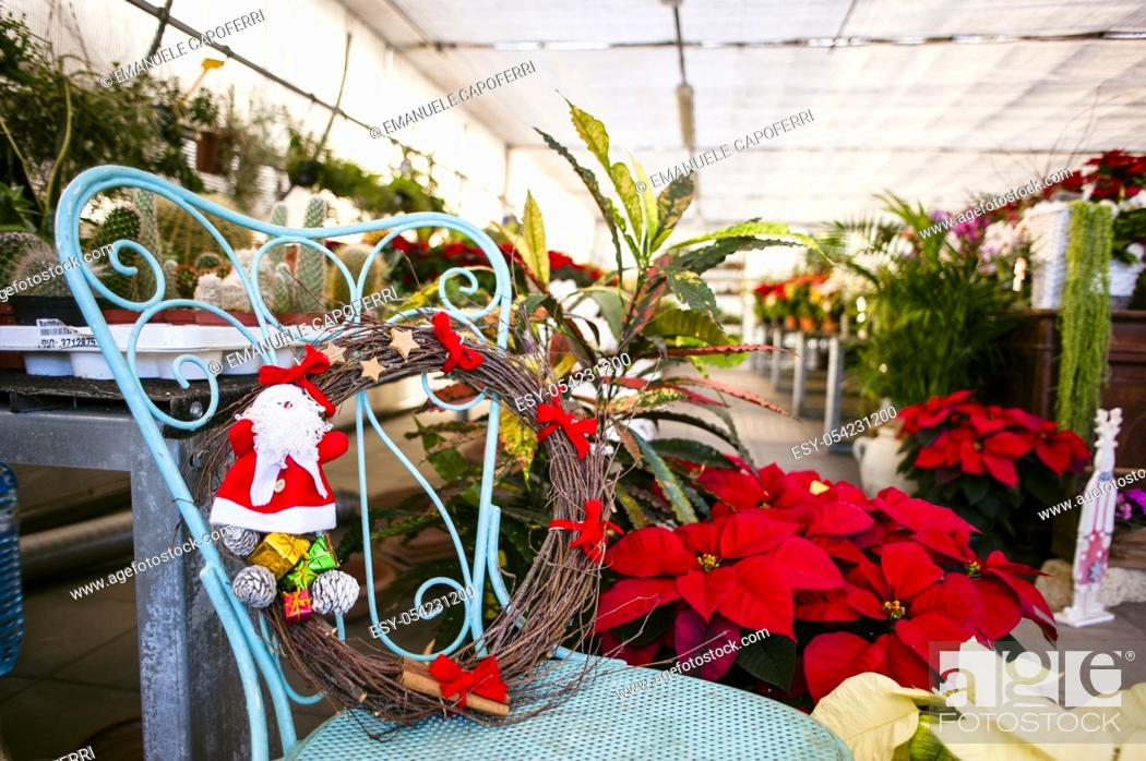 Stock Photo: Christmas decorations for sale in a plant nursery, Lombardy, Italy.