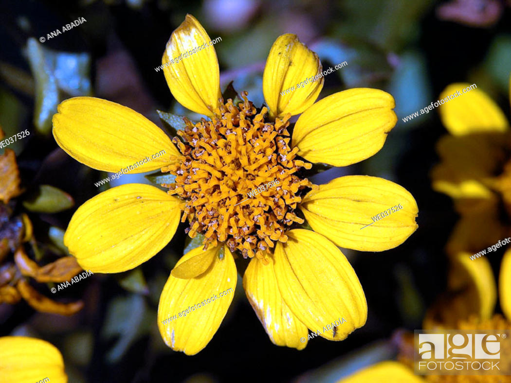 Stock Photo: Yellow flower.