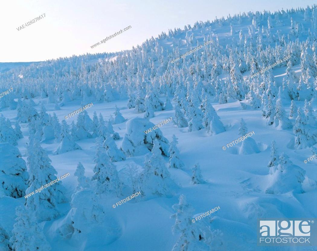 Stock Photo: winter, landscape, snowscape, snow, mountain, forest, nature.