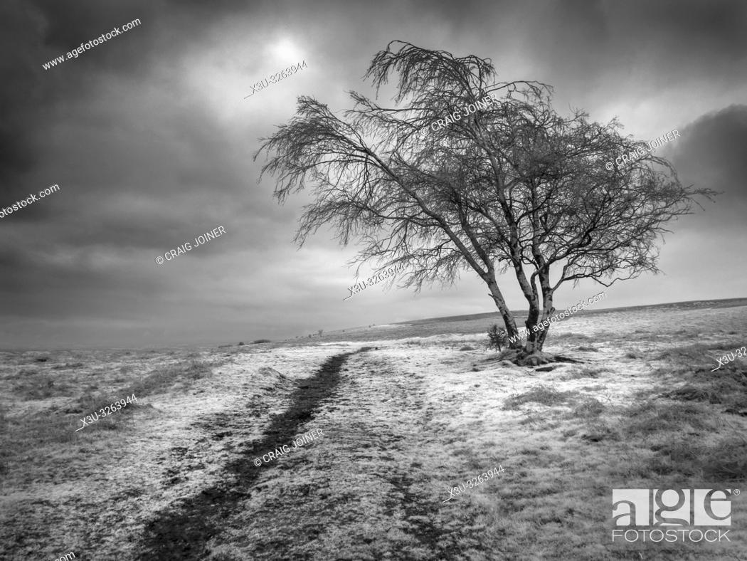 Imagen: An infrared image of Black Down on the Mendip Hills in Somerset, England.