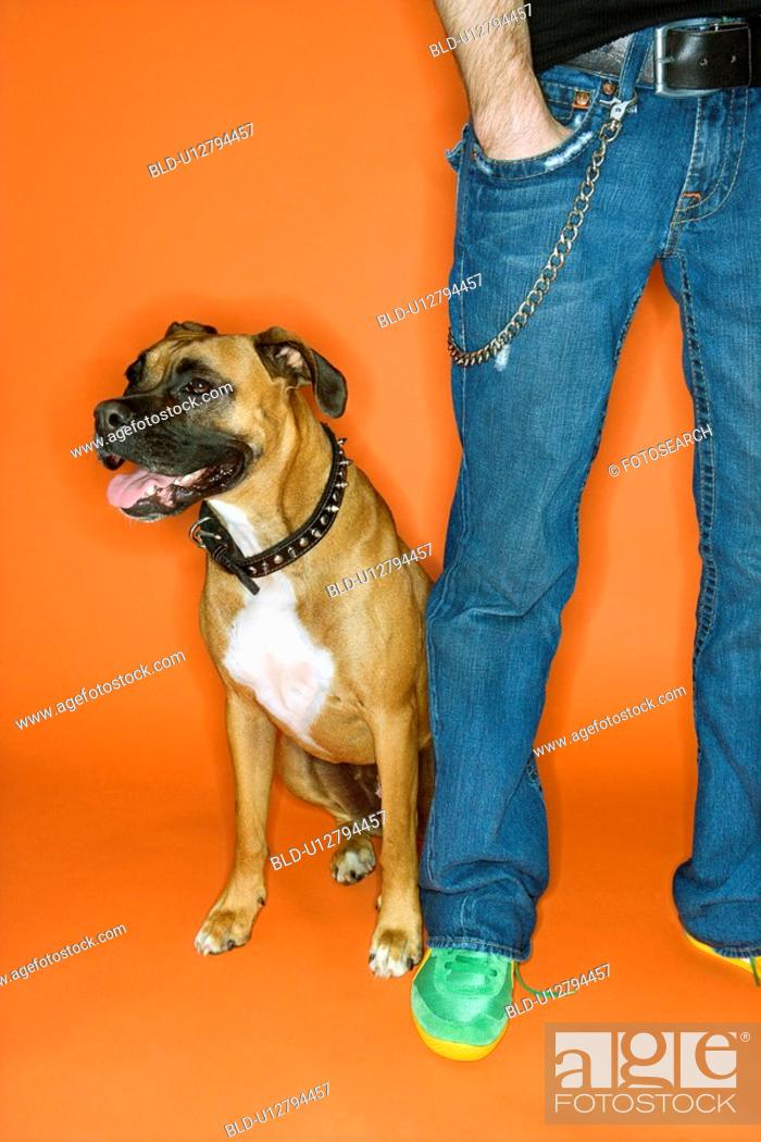 Stock Photo: Young adult Caucasian male with hand in pocket with Boxer dog.