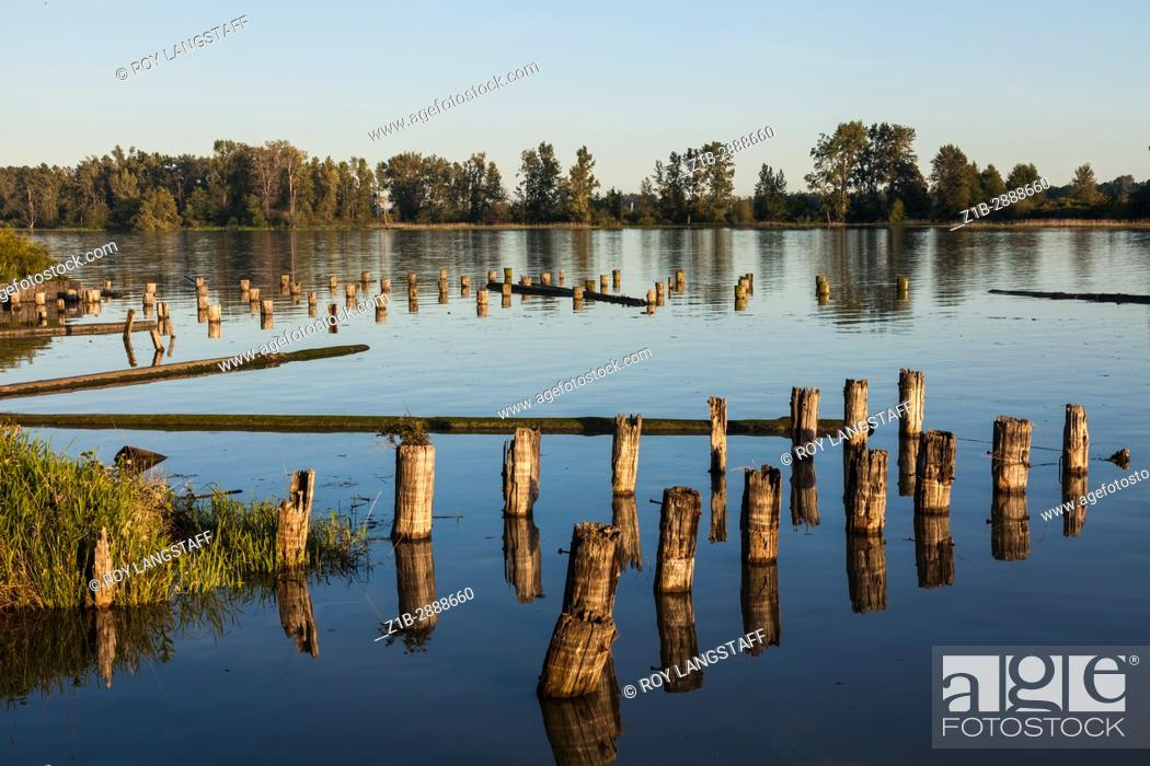 Imagen: High tide and wooden pilings on the Fraser River near Vancouver, British Columbia, Canada.