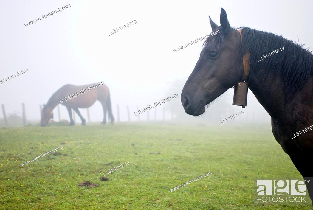 Stock Photo: Horses grazing on Somiedo Natural park.