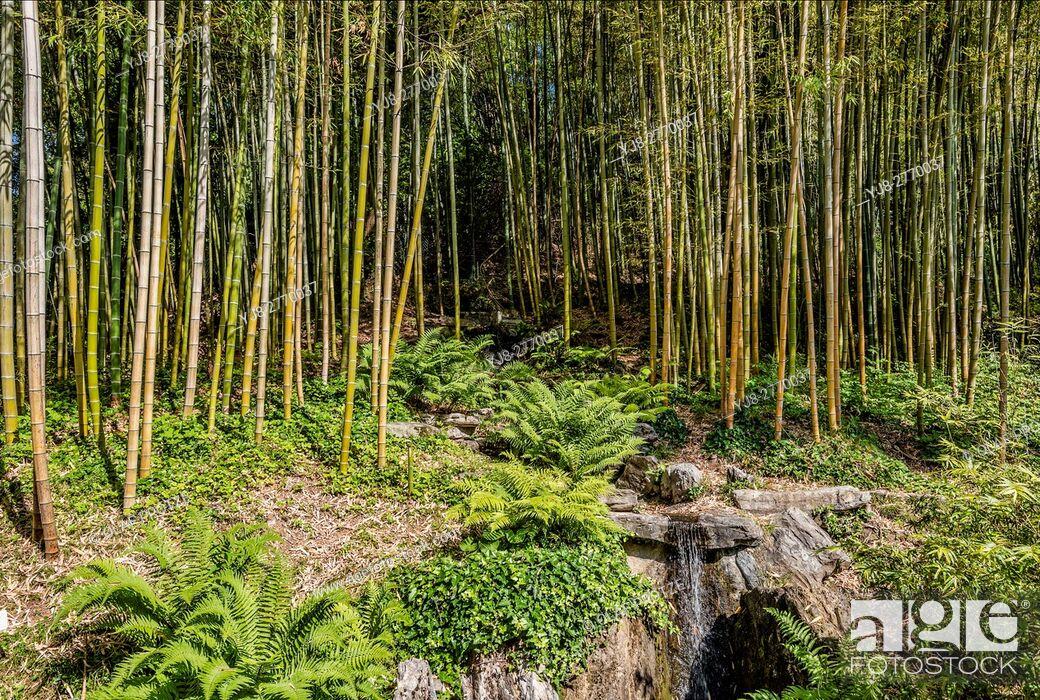 Stock Photo: Bamboo Garden at the Botanical Garden of Villa Carlotta, Tremezzina, Lake Como, Lombardy, Italy.