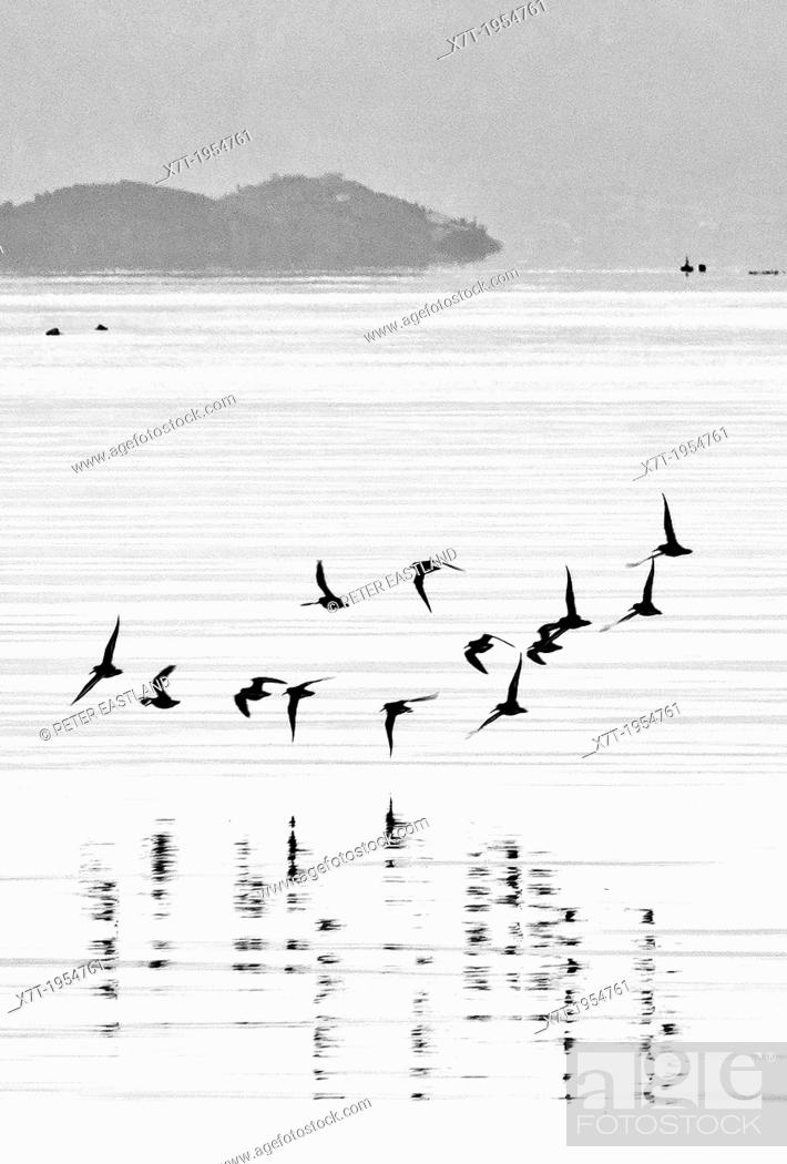 Stock Photo: Birds skimming the water in Nafplio bay, Peloponnese, Greece, .