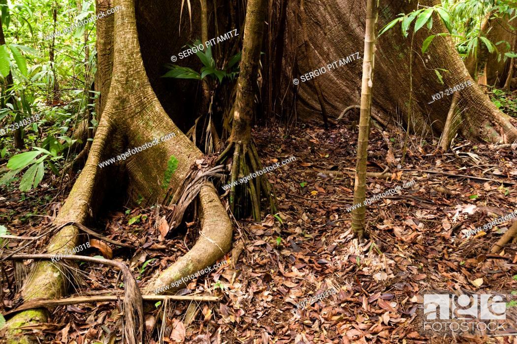 Stock Photo: Osa peninsula, Costa Rica.