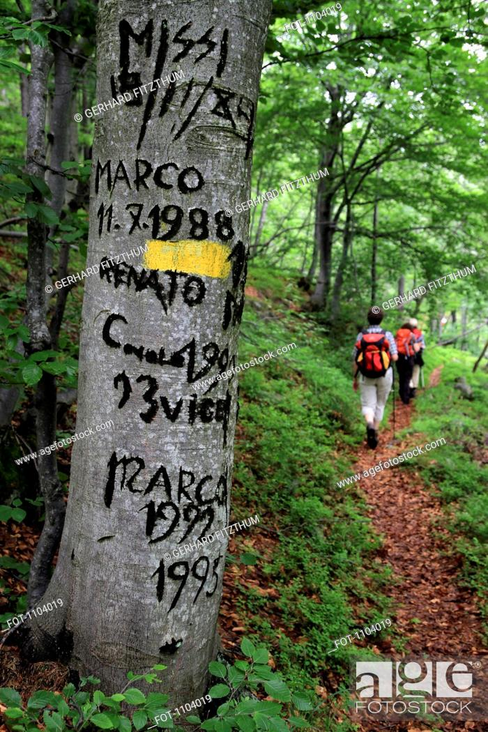 Stock Photo: Names and dates carved into a tree on a hiking trail, Val Sangone, Italy.