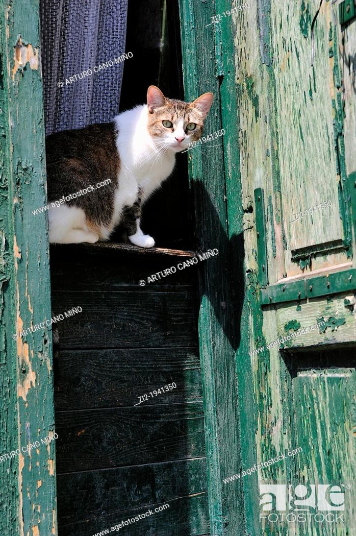 Stock Photo: Cat on a door guard. Sighisoara, Romania.