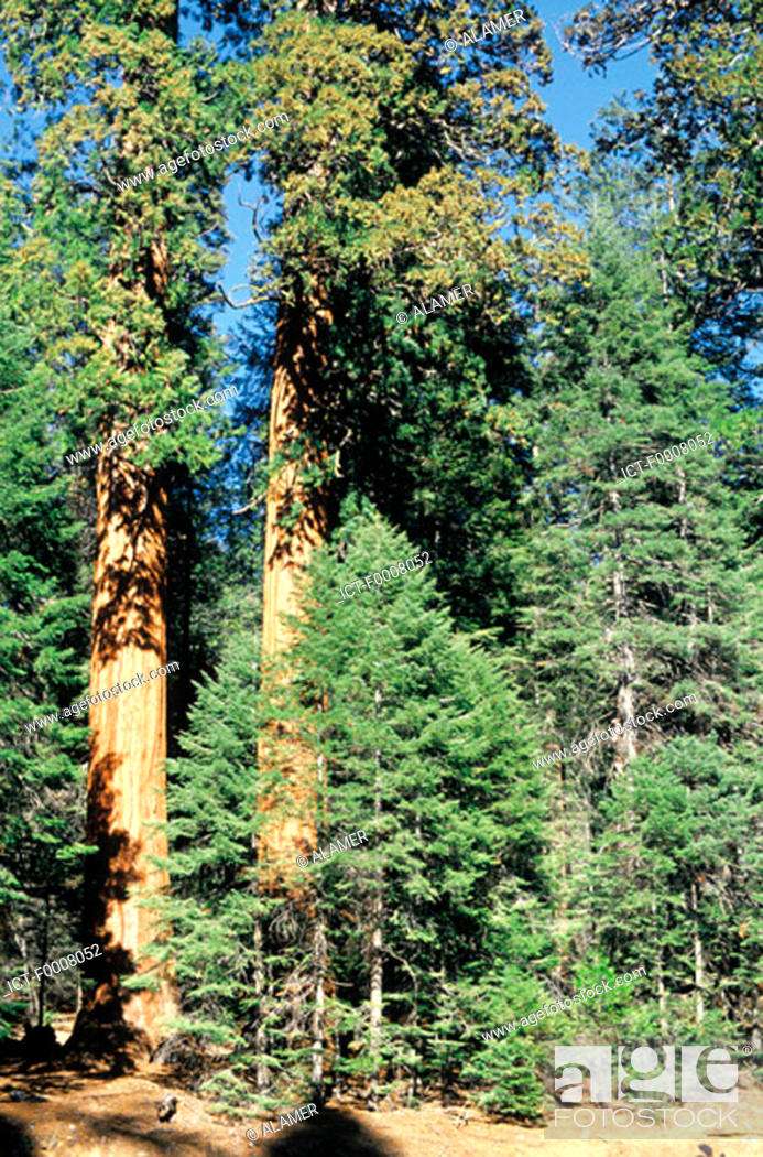 Stock Photo: Etats-Unis, Californie, Sequoia National Park.