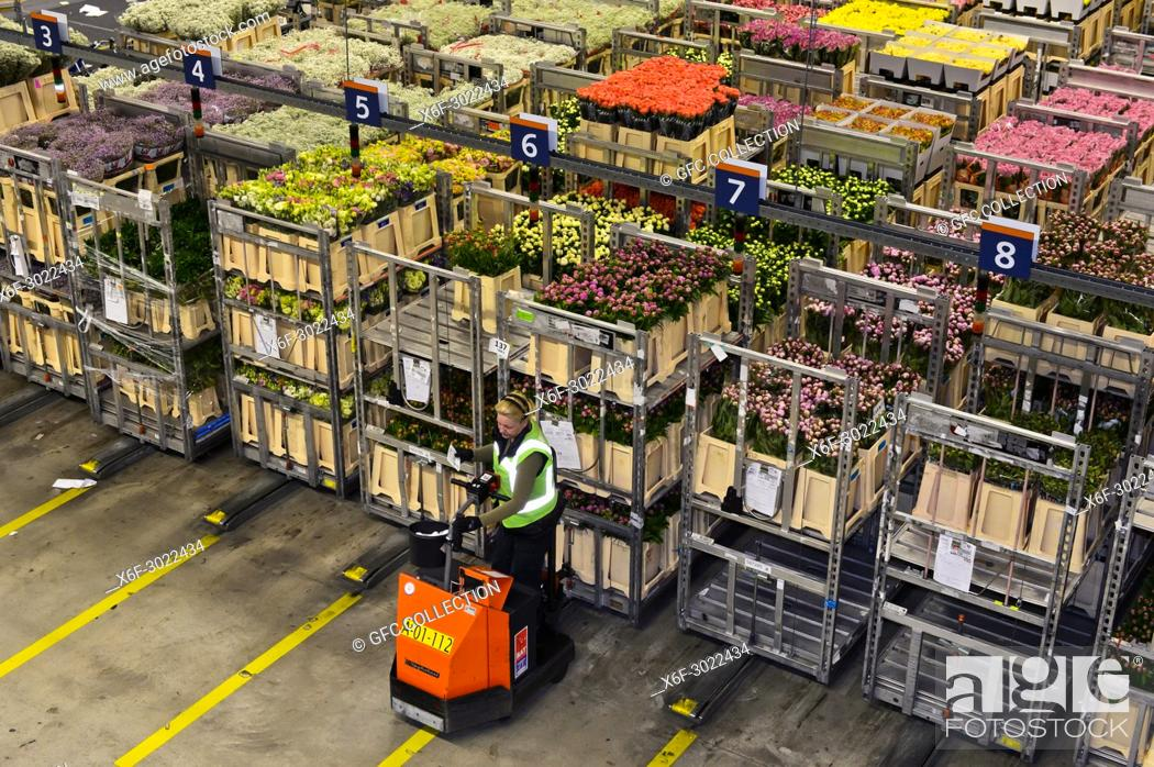 Photo de stock: Auction lots of plants and flowers are collected in a warehouse for the auction, Royal FloraHolland, Aaalsmeer, Netherlands.