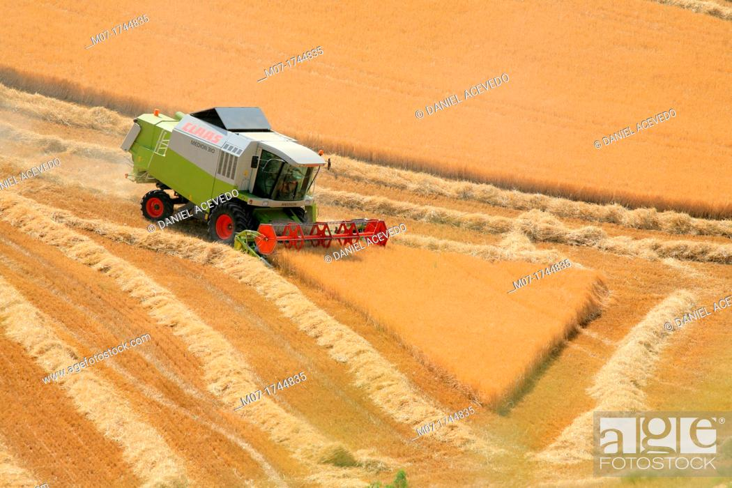 Imagen: Barley Harvesting, Castilla, Spain.