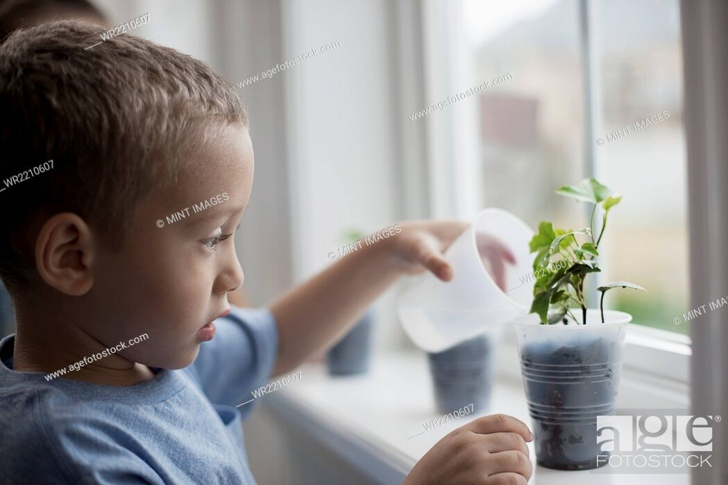 Stock Photo: A young boy looking at young plants in pots growing on a windowsill.