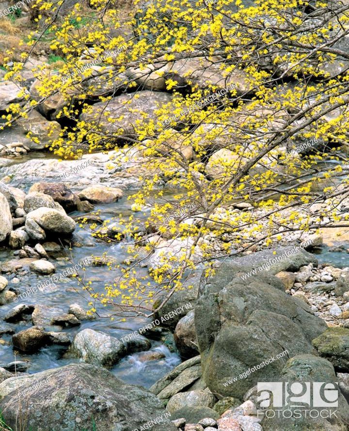 Stock Photo: Gurye,Jeonnam,Korea.