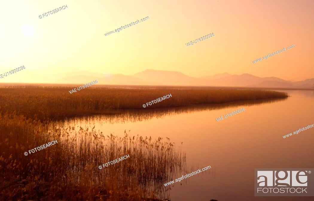 Stock Photo: eulalia, sunset, plant, scenery, nature, landscape, river.