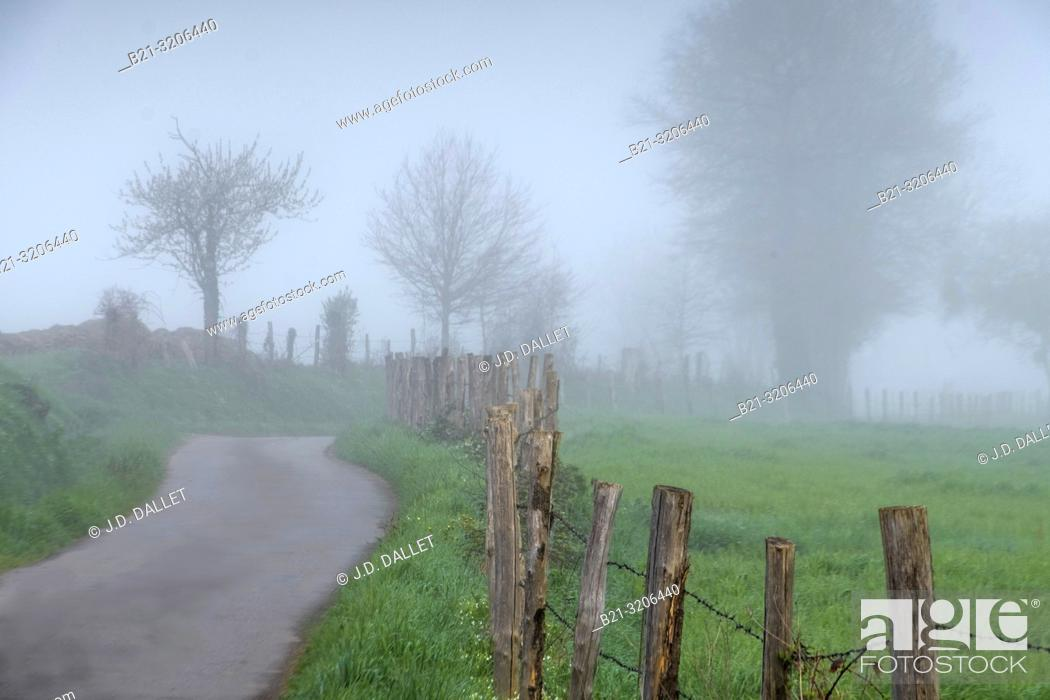 Imagen: France, Auvergne, Cantal, Foggy morning at Saint Constant.