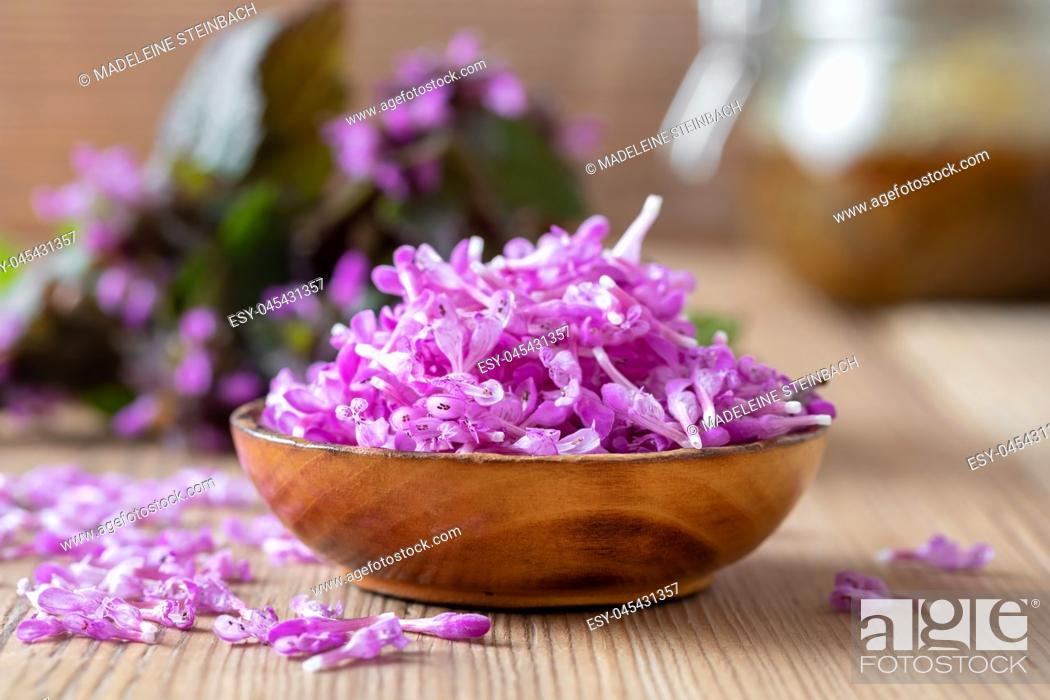 Stock Photo: Fresh purple dead-nettle flowers in a bowl on a table.