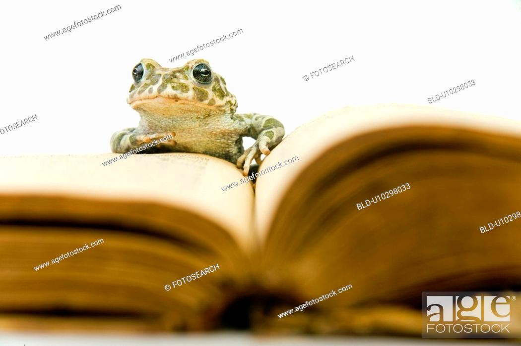Stock Photo: animals, book, body, alfred.