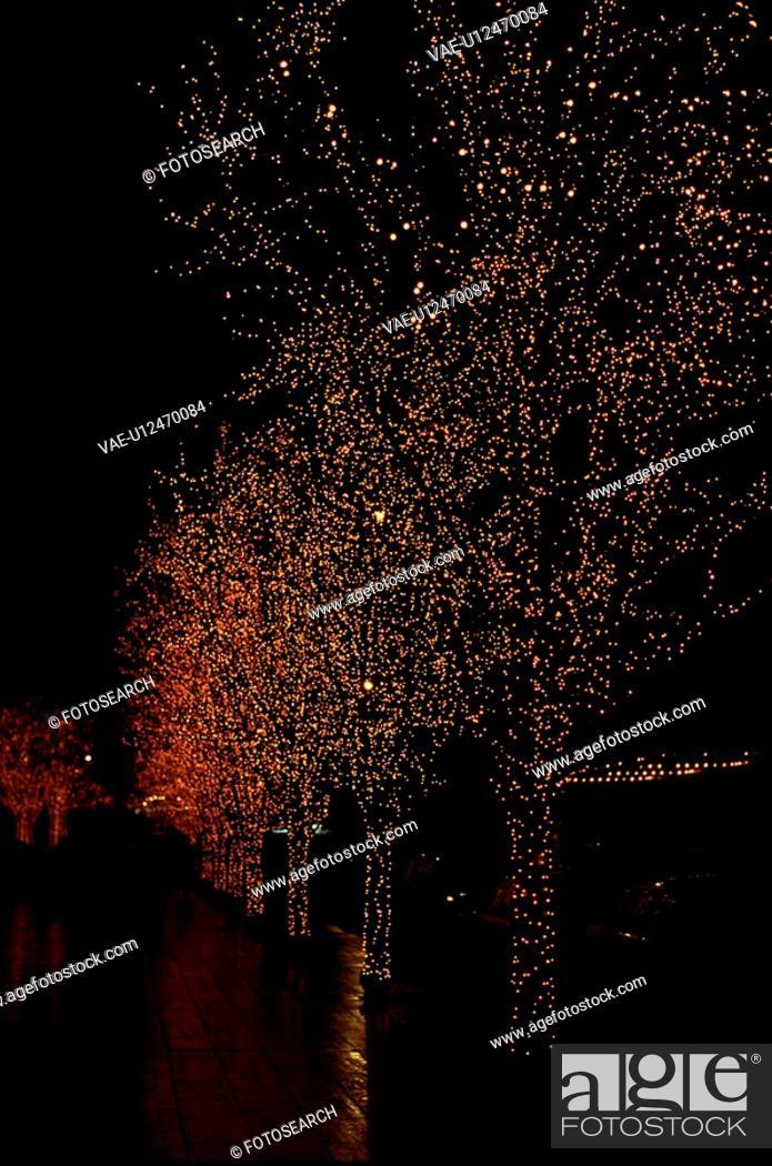 Stock Photo: Row Of Illuminated Trees.