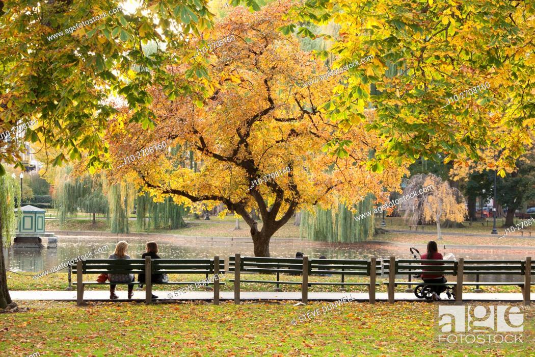 Stock Photo: Autumn, Public Garden, Boston, MA, USA.