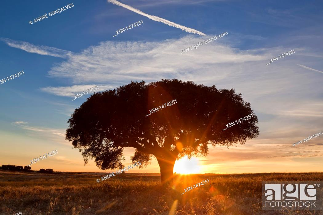 Stock Photo: Sunet in Alentejo, Portugal, Europe.