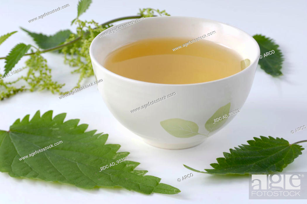 Stock Photo: Cup of nettle tea and leaves Urtica dioica indoor.