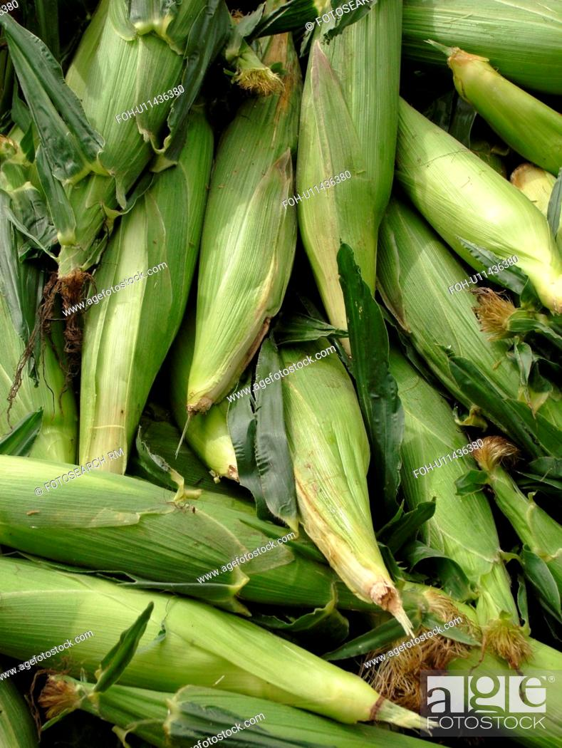 Stock Photo: Montpelier, VT, Vermont, Farmer's Market, Corn, cobs.