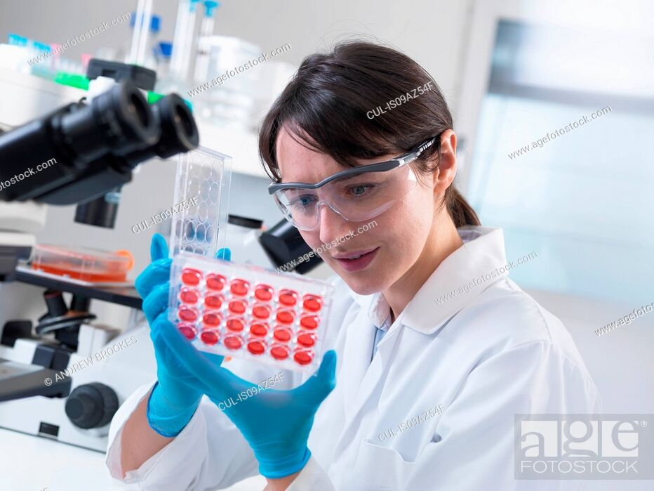 Stock Photo: Scientist viewing experimental cultures growing in multiwell tray in laboratory.