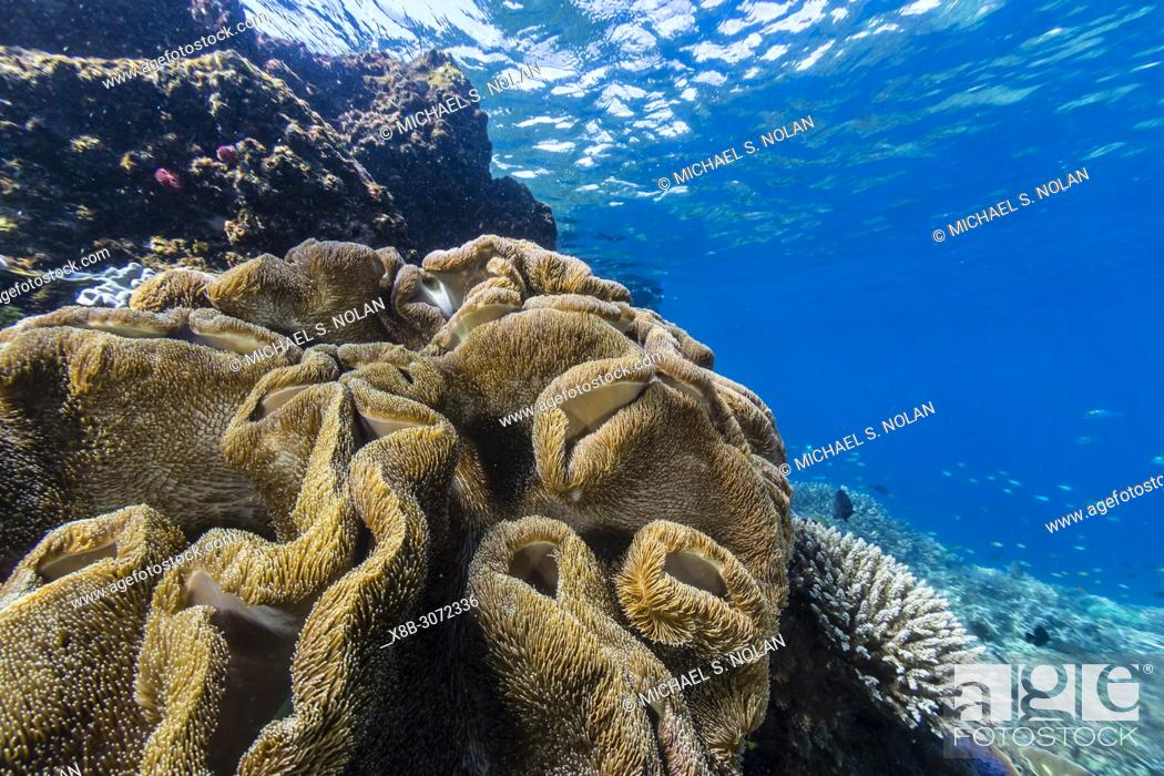 Stock Photo: Profusion of hard and soft corals on Tengah Kecil Island, Komodo National Park, Flores Sea, Indonesia.