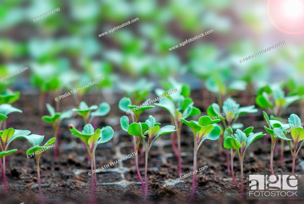 Stock Photo: Rows of potted seedlings and young plants, selective focus.