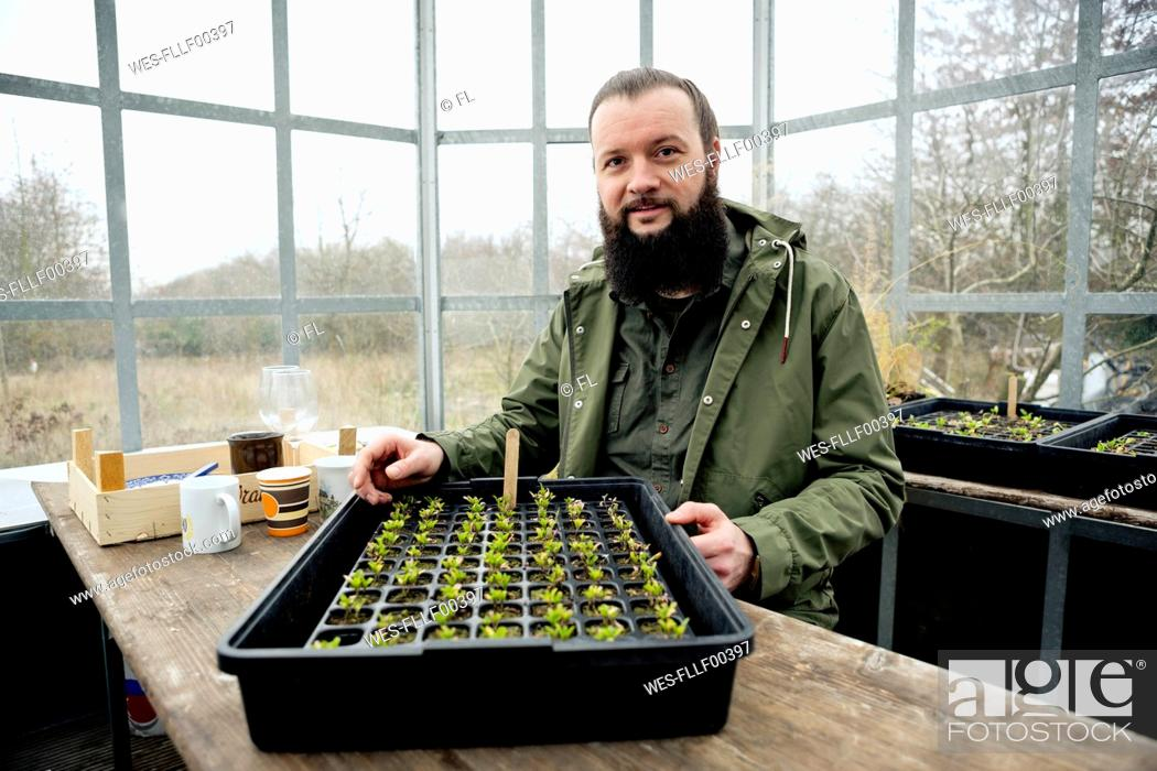 Stock Photo: Gardener in grenhouse, checking spinach seedling is nursery pots.