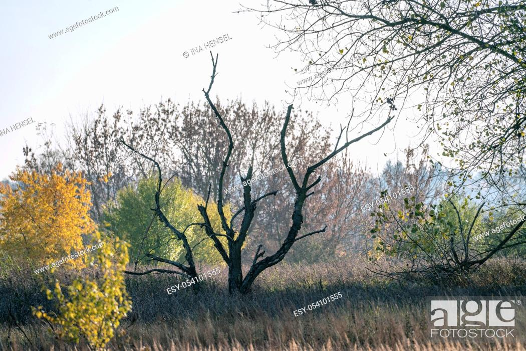 Stock Photo: Surreal autumn landscape with a dead tree in focus and coloured trees in the background.