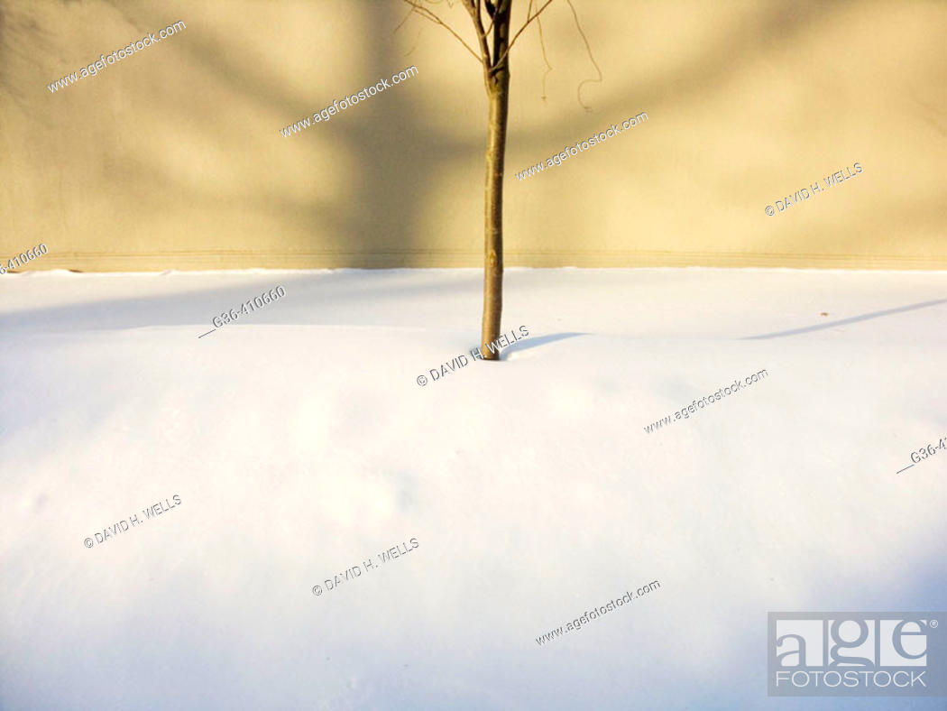 Stock Photo: Results of the winter blizzard of 2005 in Providence, Rhode Island. USA.