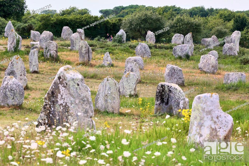 Stock Photo: Megalithic alignments of standing stones of Kermario and Menec, Carnac, Morbihan, Brittany, Bretagne, France.
