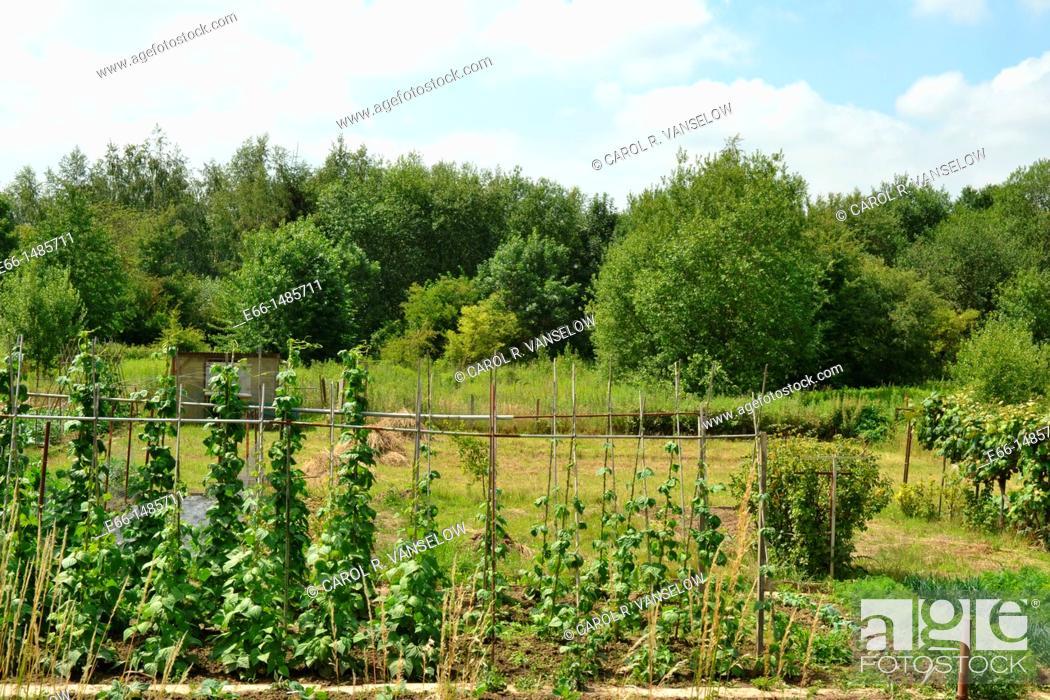 Stock Photo: community garden in Heerlen, in Limburg province of the Netherlands.